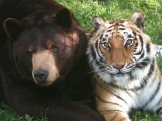 Почему у медведя короткий хвост читать онлайн