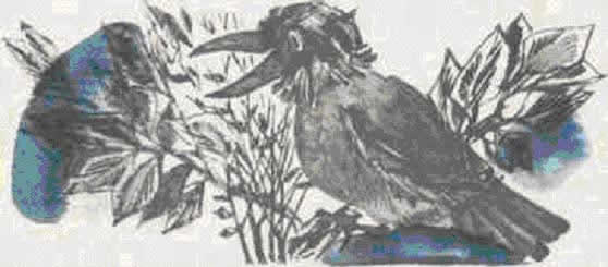 Сказочка про Воронушку — чёрную головушку и жёлтую птичку Канарейку читать онлайн
