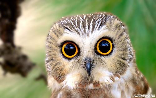 Почему у совы глаза круглые читать онлайн